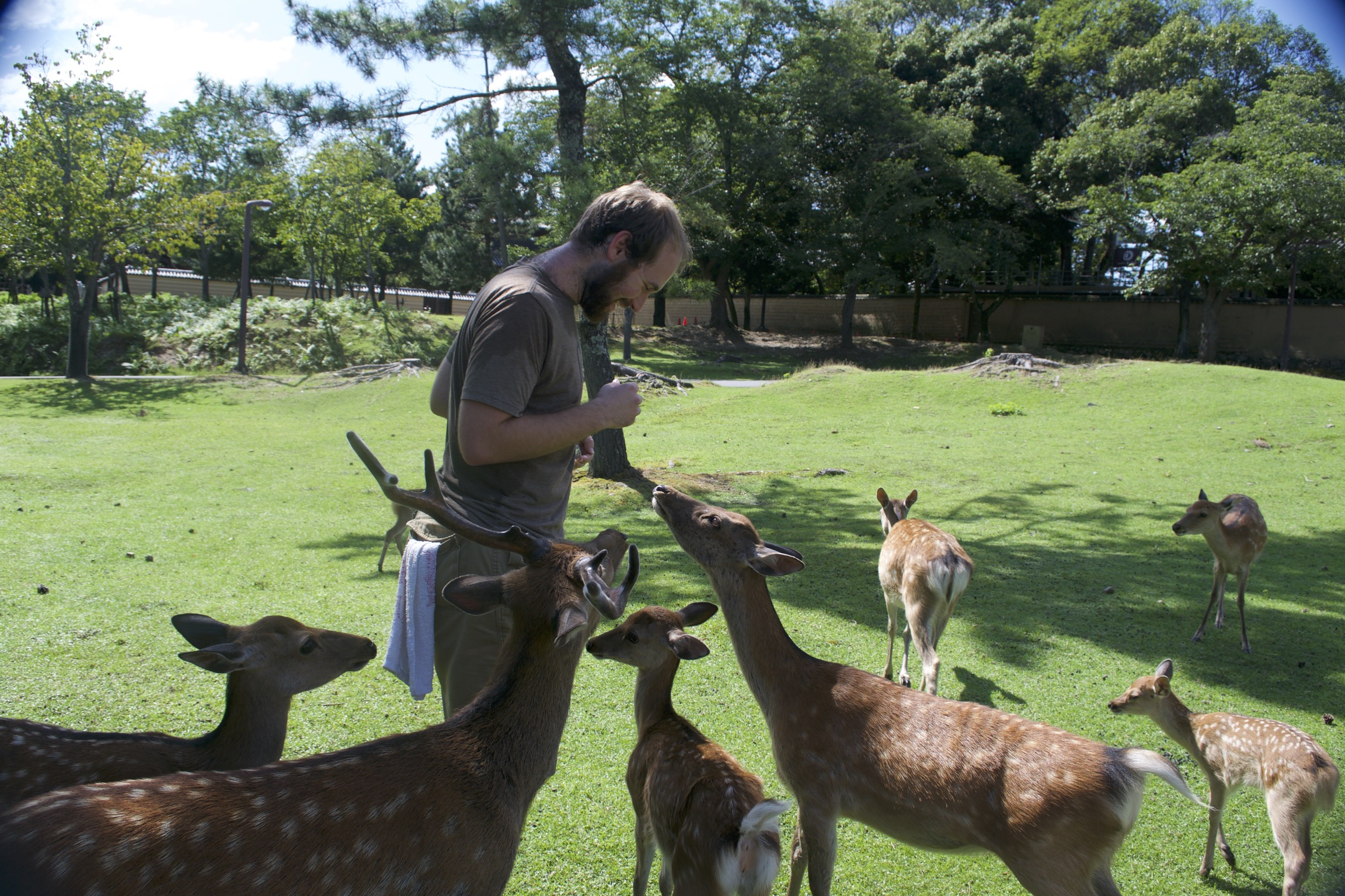 A tourist is surrounded by a buck, does, and fawns.