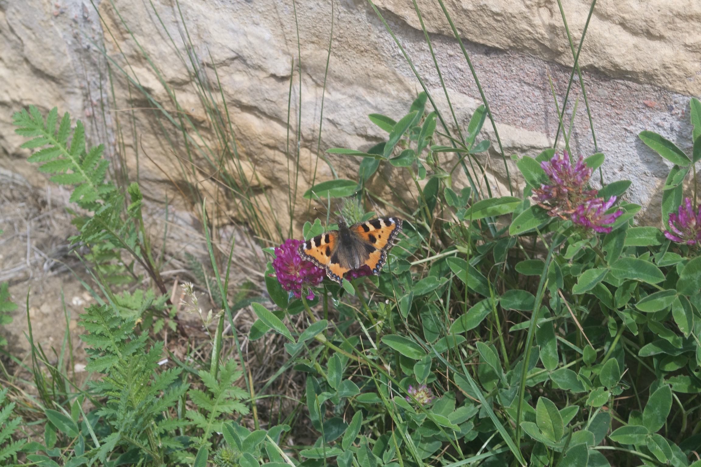 An orange butterfly sits on a purple flower.